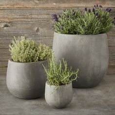 Grace your garden with planters that offer the impressive appearance of cast stone with a fraction of the weight. These innovative pots are handcrafted of a patented blend of clay and natural materials that looks and feels like solid stone but is … Indoor Plant Pots, Indoor Planters, Diy Planters, Garden Planters, Planter Pots, Potted Garden, Diy Concrete Planters, Decorative Planters, Terrace Garden