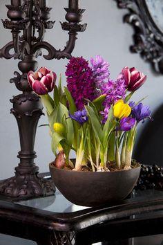 spring decor home centerpiece potted bulbs tulips crocus hyacinths