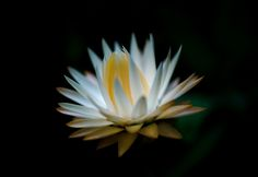 Rising Star by Susan  Chan  on 500px