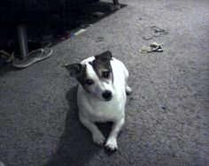 """""""Gizzy is the second thing I am very grateful for. She brought so much joy into my life. Sadly she is no longer with me, but I will always be grateful for having her in my life.""""  Submitted June 21, 2012  First Name Toni   USA  Photo Date June 23, 2009"""