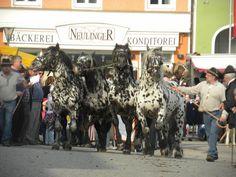 Noriker horses Austria -- my other favorite