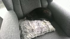 Shag Rug, Rugs, Animals, Home Decor, Shaggy Rug, Farmhouse Rugs, Animaux, Animal, Blanket