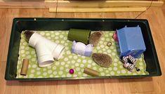 hedgehog cage setup