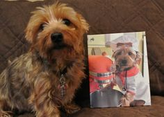 Printcopia Review &Giveaway - Home - Kirby the Dorkie  @KirbytheDorkie #Giveaway