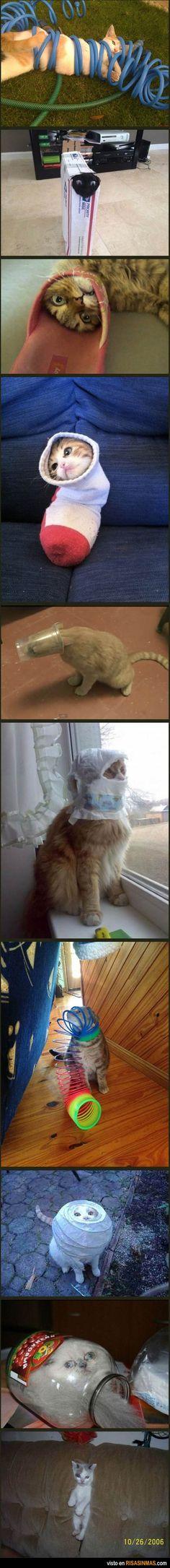 Gatos, y su extraña afición por meterse en los sitios más inverosímiles.