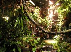 rainforest museum exhibit - Google Search