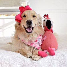 Happy Flamingo Friday friends!! Have a wonderful weekend!