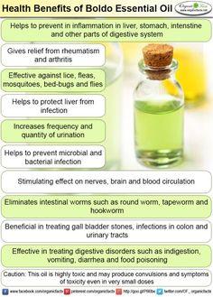 Health Benefits of Boldo