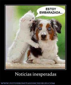 Imagenes de Animales para Facebook: Noticias inesperadas