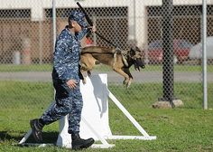 Master-at-Arms Seaman Christopher Rivera, assigned to Joint Base Pearl Harbor-Hickam Military Working Dogs (JBPHH MWD) Section, runs his K-9 partner Asga through an obstacle course at the base kennel. (U.S. Navy photo by Mass Communication Specialist 2nd Class Nardel Gervacio/Released)