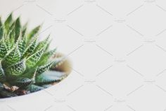 Succulent on white by René Jordaan Photography on @creativemarket #greenery#green#color#fresh#spring#garden#succulent