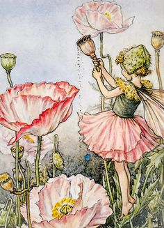 A personal favourite from my Etsy shop https://www.etsy.com/uk/listing/549907457/the-flower-fairies-the-shirley-poppy