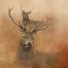 Stag Party Beautiful warmth to this work from Lins  #artgifts #stags #animalart @lin_dies