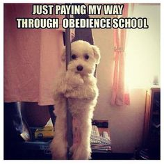 Obedience school