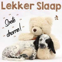Good Night Sleep Tight, Good Morning Good Night, Goeie Nag, Good Night Sweet Dreams, Afrikaans, Teddy Bear, Animals, Inspiration, Boards