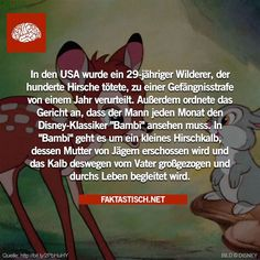 30 wissenswerte Fakten #2 - CONN3CTOR Funny Memes, Jokes, Anarchy, Worlds Of Fun, Dreamworks, Fun Facts, Haha, Funny Pictures, Cool Stuff