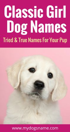 Hundreds of classic girl dog names that will stand the test of time. Puppy Girl Names, Big Dog Names, Pet Names, Girl Puppy Names Unique, Cool Female Dog Names, Puppies Names Female, Newfoundland Puppies, Classic Girl, Dog Diet