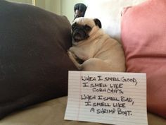 Dog shaming - When I smell good, I smell like corn chips. When I smell bad, I smell like a shrimp boat.