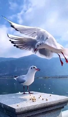 Most Beautiful Birds, Beautiful Photos Of Nature, Beautiful Gif, Animals Beautiful, Aesthetic Photography Nature, Nature Photography, Love Animation Wallpaper, Water Live Wallpaper, Scotland Places To Visit