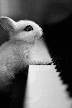 bunny & piano