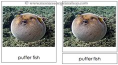 Fish - Montessori 3-Part Classified Cards for Montessori Learning at home and school.