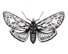 Skull Moth Tattoo Design
