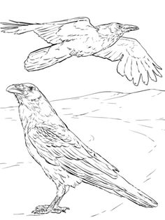 Common Raven Coloring Page