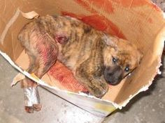 email-cruelty-message-pic-1.jpg The individuals responsible for this brutality should be treated as criminals and shown no mercy. Did they display mercy?