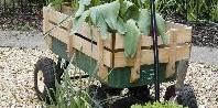 How to Grow Vegetables in Rubbermaid Containers | eHow.com