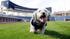 Yes!! :)  Hank the Dog heading to Milwaukee, remaining part of Brewers family | FOX Sports on MSN