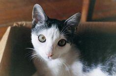 Understanding Your Cat's Eyes