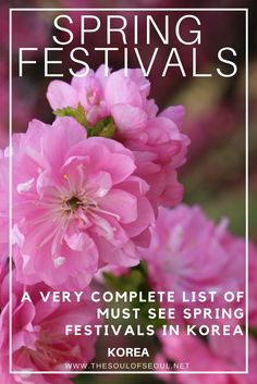 A Very Complete List of Spring Festivals In Korea: Spring is the time for cherry blossom festivals, flower festivals, lantern parades and more in Korea. Check out this complete list of spring festivals around Korea from Seoul to Busan and everything in between.