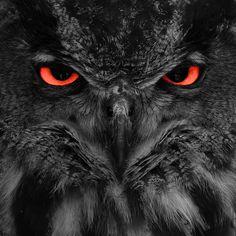 Night owl~