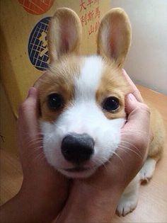 I present: a puppy rabbit! - Imgur