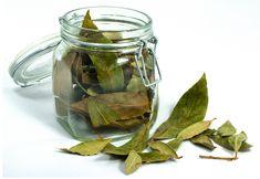 plantas-medicinais-folha-de-louro