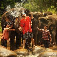 Estou postando essa foto e escrevendo emocionado pra vocês... Este foi, sem dúvidas, o dia mais incrível da minha vida. Sem palavras para descrever essa experiência... #UmViajanteAsia2015 #thailand #chiangmai #tailandia #elefantes #elephant