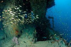 Scuba diving @KOSK phi phi http://#diving http://#Thailand http://#scuba http://#arctivity http://arctivity.com