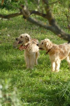 Doge, Lamb, Animals, Animales, Animaux, Animal, Animais, Baby Sheep