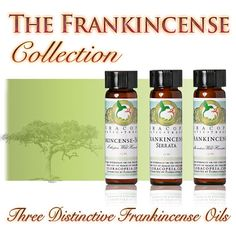 Frankincense Oil Collection - Floracopeia's Frankincense Oil Collection contains three full-size bottles of distinctively different frankincense oils.  http://www.floracopeia.com/Store/Essential-Oils/frankincense-oil-collection.html #frankincense #essentialoil #essentialoils #aromatherapy