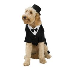 Dapper Dog Groom Costume from Rubie's Costume Co. - a bride has to have a groom.....atleast someone seems to be happy..........