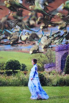 Birds, www.turckart.blogspot.com