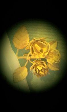 Love my vintage roses