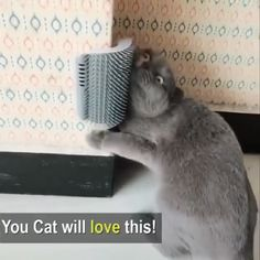 Petting for your cat 😱 😍 😻 when you are not home - Katzen zeug - . - Tiffany Austin - Petting for your cat 😱 😍 😻 when you are not home - Katzen zeug - . Petting for your cat 😱 😍 😻 when you are not home - Katzen zeug - - I Love Cats, Cute Cats, Funny Cats, Animals And Pets, Funny Animals, Cute Animals, Cat Playground, Cat Supplies, Cat Breeds