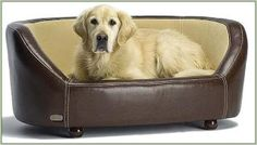 Pet Shop 247 - Online Petcare Superstore: Sick of Sharing your Bed or Sofa with Your Dog?