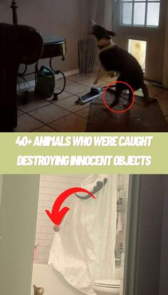 Animals # Were Caught #Desbjectstroying# Innocent O Cute Little Puppies, Cute Baby Cats, Cute Cats And Kittens, Kittens Cutest, Kitchen Countertop Decor, Pretty Flower Tattoos, Stunning Prom Dresses, Diy Projects For Bedroom, Glass Photography