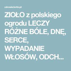 ZIOŁO z polskiego ogrodu LECZY RÓŻNE BÓLE, DNĘ, SERCE, WYPADANIE WŁOSÓW, ODCHUDZA i… – zdrowie.hotto.pl, domowe sposoby popularne w necie