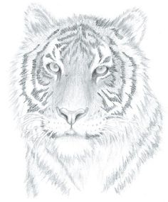 How To Draw Realistic Portraits In Just 4 Weeks! Drawing animals can be one of the most fun and rewa Realistic Animal Drawings, Realistic Eye Drawing, Easy Drawings, Drawing Animals, Pencil Drawings, Pencil Shading, Tiger Drawing, Nature Drawing, Cat Steps