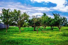 #meadow #countrysideliving #countrysidelife #rural_landscapes #ruralexploration #ruralliving #farmlife #countryside #rurallife #rural_love #rural #naturephotography #villagelife #nature_perfection #nature_shooters #nature_brilliance #nature_wizards #nature_captures #natureaddict #tree_captures #tree_magic #treestagram #treescollection #tree_brilliance #splendid_woodlands #splendid_shotz #mothernature #fifty_shades_of_nature #rsa_nature #liveauthentic