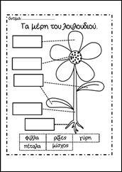 ανοτομία λουλουδιού