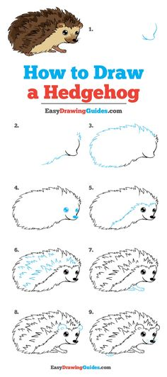 -How to Draw a Hedgehog - Really Easy Drawing Tutorial- Learn How to Draw a Hedgehog: Easy Step-by-Step Drawing Tutorial for Kids and Beginners. See the full tutorial at easydrawingguides…. Hedgehog Art, Hedgehog Drawing, Cute Easy Drawings, Art Drawings For Kids, Drawing For Kids, Drawing Ideas, Drawing Drawing, Learn Drawing, Drawing Tips